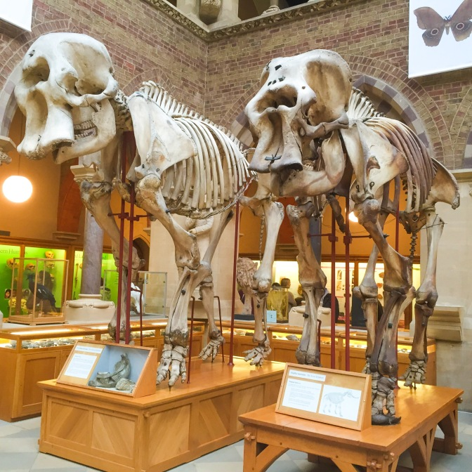 Skeletons at The Natural History Museum, Oxford